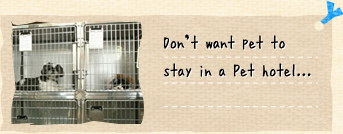 Don't want pet to stay in a Pet hotel...